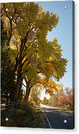 A Day For A Daydream Acrylic Print by Allen Lefever