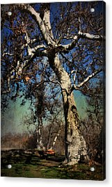 A Day Like This Acrylic Print