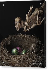 A Dead Bird Flies Into Its Nest Only To Find Chocolate Eggs Acrylic Print
