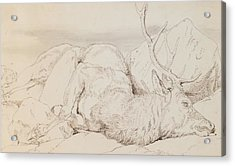 A Dead Stag Acrylic Print by Sir Edwin Landseer