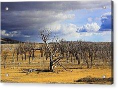 A Dead Tree Among Many Acrylic Print