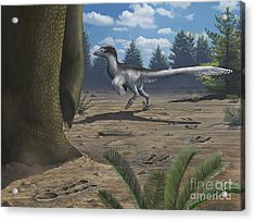 A Deinonychosaur Leaves Tracks Acrylic Print by Emily Willoughby