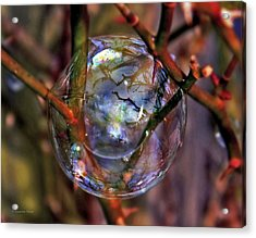 A Delicate Balance Acrylic Print by Suzanne Stout