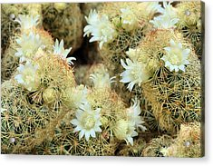 A Desert Floral Acrylic Print by JC Findley