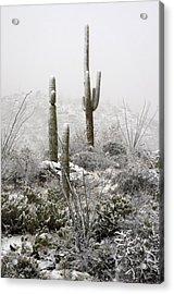 A Desert Snow Day  Acrylic Print by Saija  Lehtonen