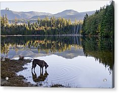 A Dog At The Lake Acrylic Print by Peggy Collins