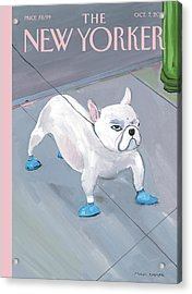 A Dog Wears Shoes On The City Sidewalk Acrylic Print