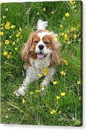 A Dog's Buttercup Heaven Acrylic Print by Jo Collins