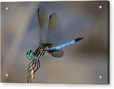 A Dragonfly Iv Acrylic Print by Raymond Salani III