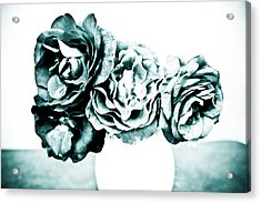 A Dream Of Roses Acrylic Print by Ronda Broatch