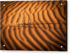 A Dream Of Water - Namibia Sand Dune Photograph Acrylic Print by Duane Miller