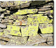 A Dry Stone Wall On Lingmoor Acrylic Print by Ashley Cooper