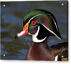 A Duck By Dali Acrylic Print