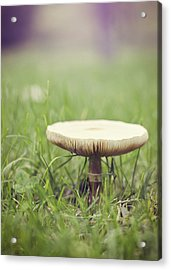 A Fairy Umbrella Acrylic Print by Heather Applegate