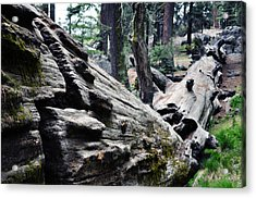 Acrylic Print featuring the photograph A Fallen Giant Sequoia by Kyle Hanson