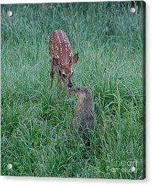 A Fawn And A Woodchuck Acrylic Print