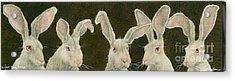 A Few Grey Hares... Acrylic Print