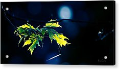 A Few Leaves In The Sun Two Acrylic Print