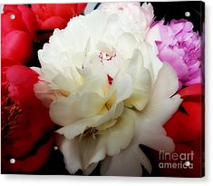 A Few Peonies Acrylic Print by Heather L Wright