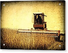 A Field For Harvest Acrylic Print