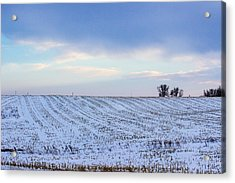 A Field In Iowa At Sunset Acrylic Print