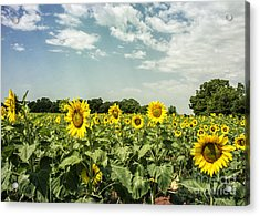 A Field Of Glory Acrylic Print by Terry Rowe