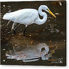 Acrylic Print featuring the photograph A Fine Catch by Kate Brown