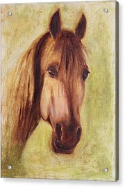 Acrylic Print featuring the painting A Fine Horse by Xueling Zou