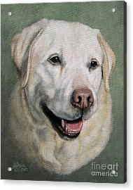 A Fine Old Lady Yellow Labrador Portrait Acrylic Print