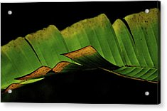Acrylic Print featuring the photograph A Floating Heliconia Leaf by Lehua Pekelo-Stearns
