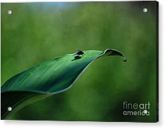 Acrylic Print featuring the photograph A Fly And His Shadow by Thomas Woolworth