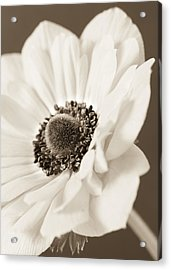 A Focus On The Details Acrylic Print by Caitlyn  Grasso