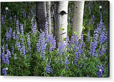 A Forest Of Blue Acrylic Print