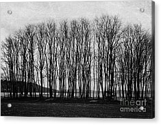 A Forest Of Trees Acrylic Print by Sylvia Cook