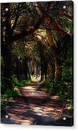 A Forest Path -dungeness Spit - Sequim Washington Acrylic Print