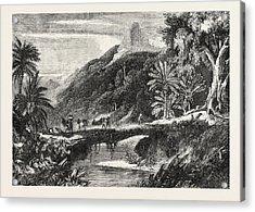 A Forest Scene In Madagascar Acrylic Print