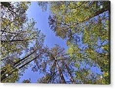A Forest Sky Acrylic Print