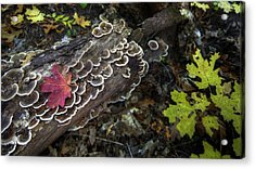 A Forest Tide Pool Acrylic Print by Sean Foster