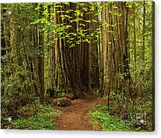 A Forest Welcome Acrylic Print