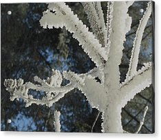 A Frosty Morning Acrylic Print by Mike Breau