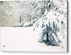 A Gentle Frosting Acrylic Print