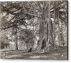 A Gentleman Sitting Beneath A Large Native Tree In British Ceylon Acrylic Print by Scowen and Co