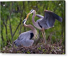 A Gift For The Nest Acrylic Print