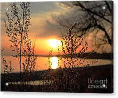 A Golden Moment In Time Acrylic Print by Inspired Nature Photography Fine Art Photography