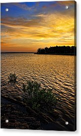A Golden Morning From 2011 Acrylic Print by Carolyn Fletcher