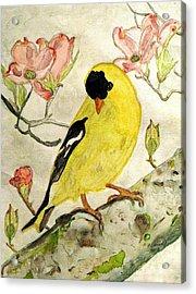 A Goldfinch Spring Acrylic Print