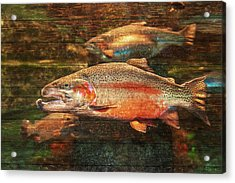 A Good Day To Be A Salmon Acrylic Print