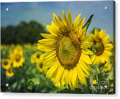 A Grand Sunflower Acrylic Print by Terry Rowe