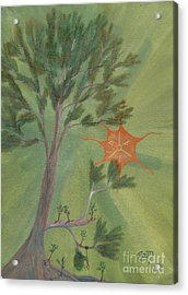 A Great Tree Grows Acrylic Print by Robert Meszaros