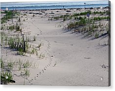 A Gull's Walk To The Ocean Acrylic Print by Greg Graham